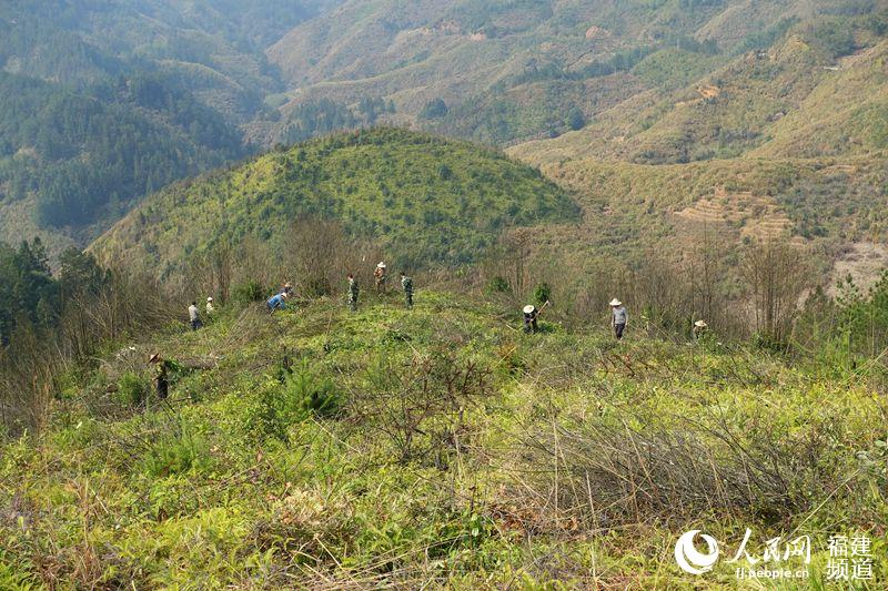 """福建检察机关监督""""补植复绿"""" 保护森林生态"""
