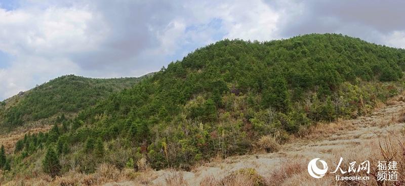 保护森林生态图片