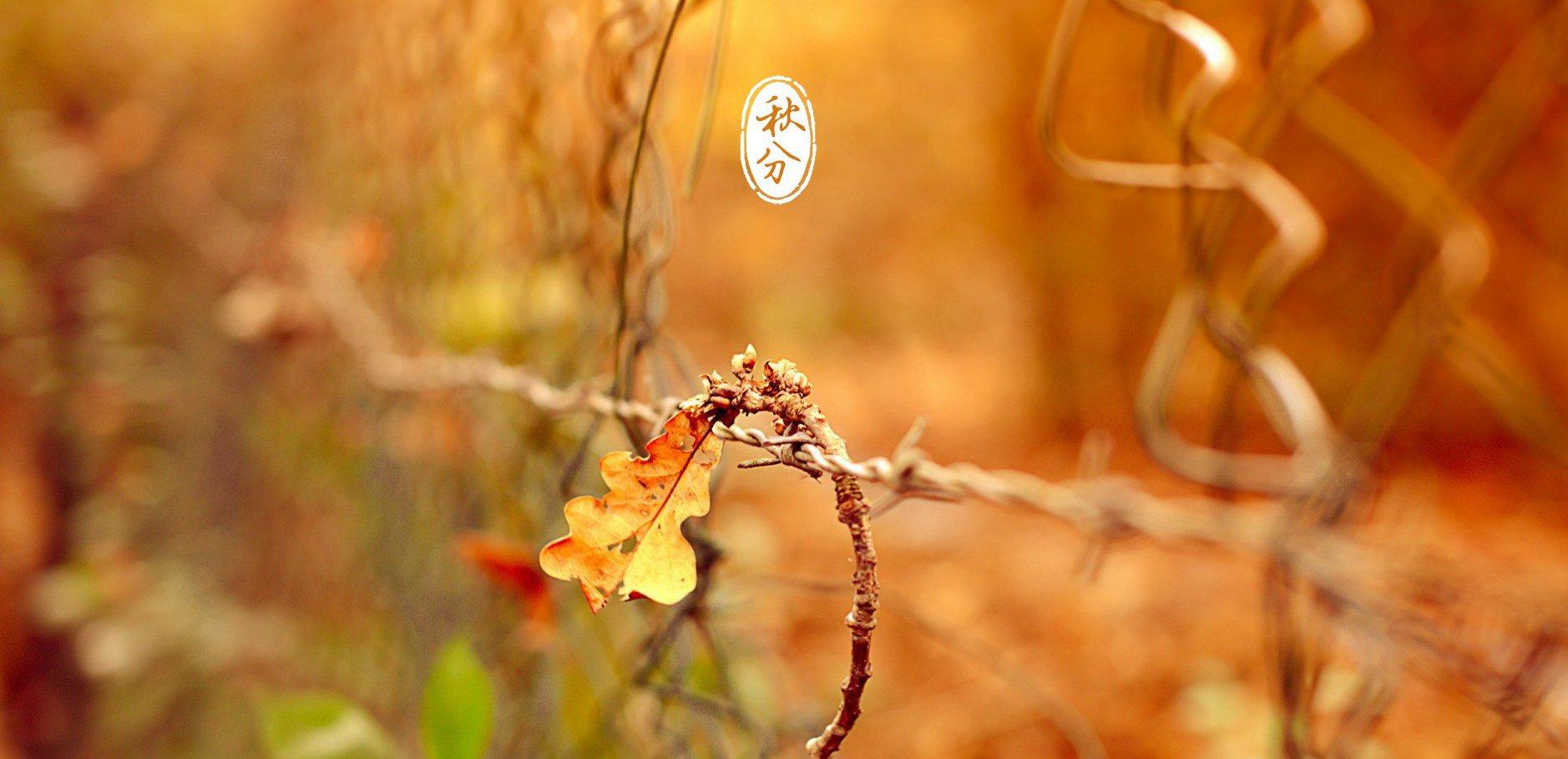 秋季三个部位不能冻 注意饮食解秋燥