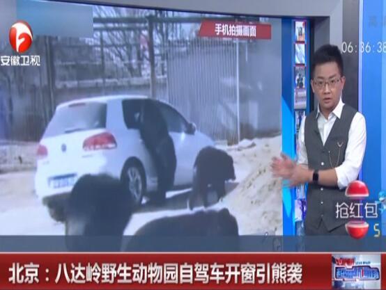 北京野生动物园黑熊伸爪进车窗