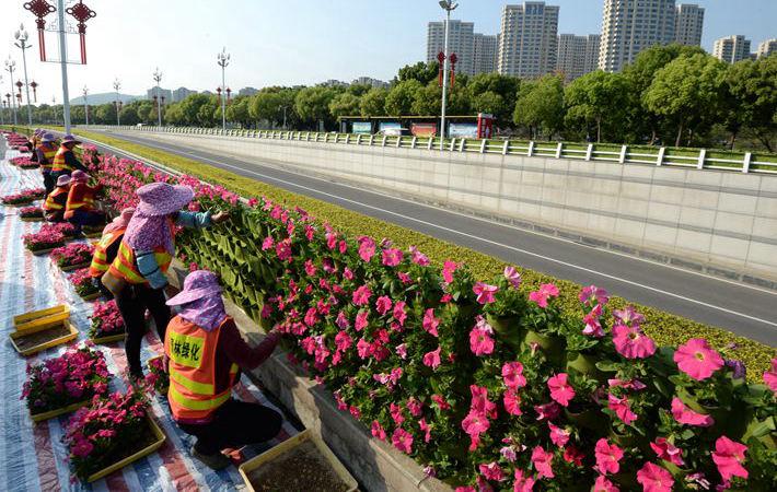 福州:千余米牵牛花带迎峰会