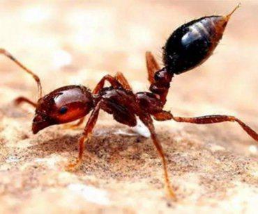 福州部分公园绿地发现红火蚁