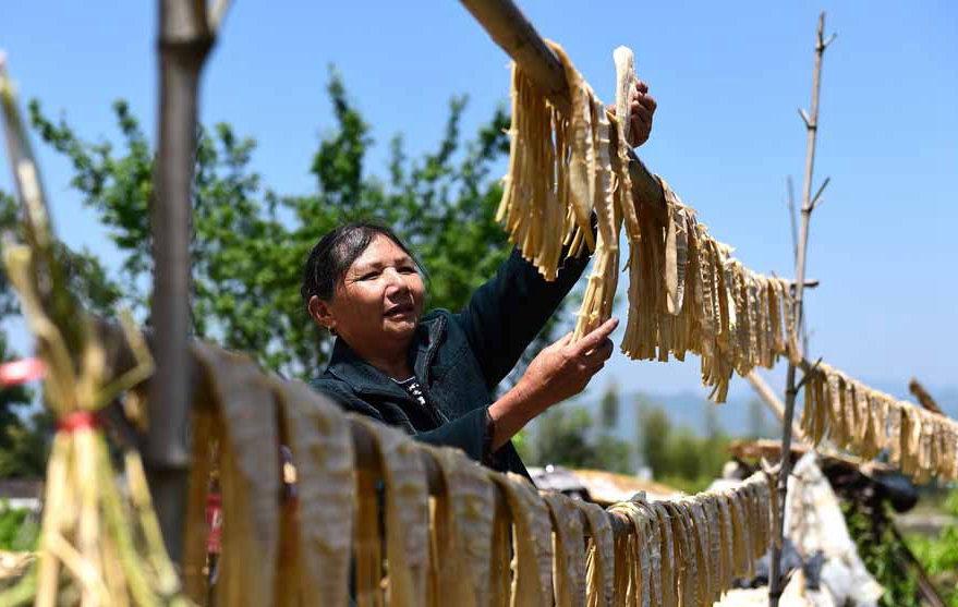 南平政和:山中竹笋助力致富