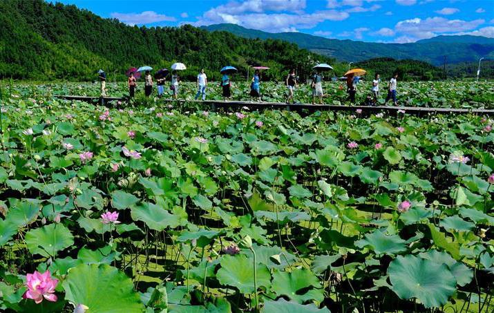 武夷山发展特色种植 促进乡村旅游发展