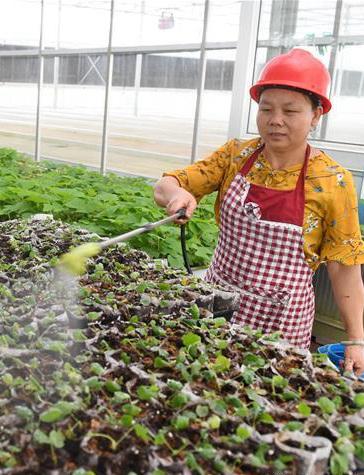 福建将乐:生态产业助脱贫