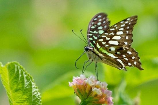 福州温泉公园内昆虫戏花