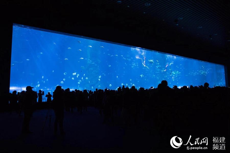 海洋世界美不胜收
