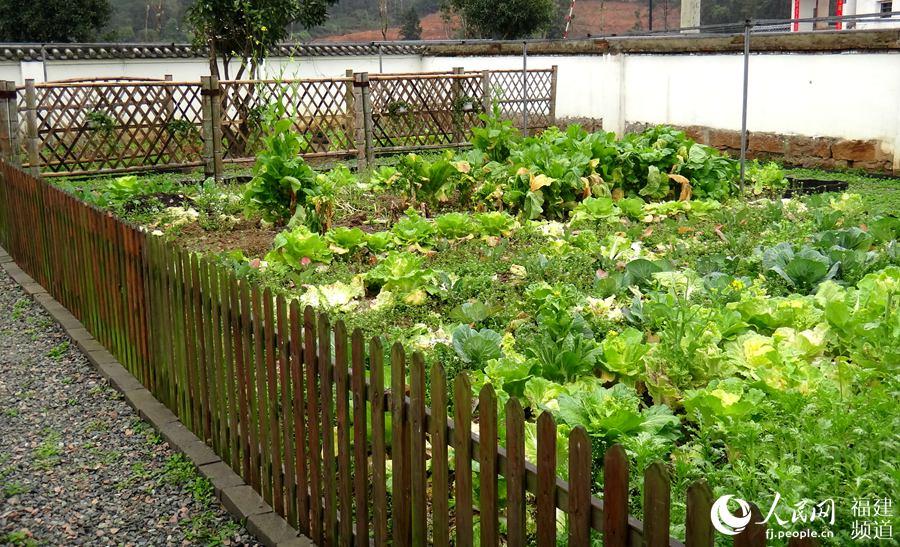"""天竹村的""""美丽庭院 微菜园""""图片"""