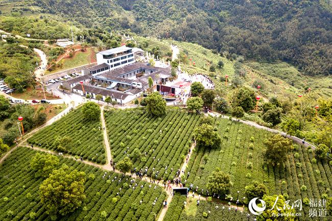 福建安溪:推进茶业供给侧改革