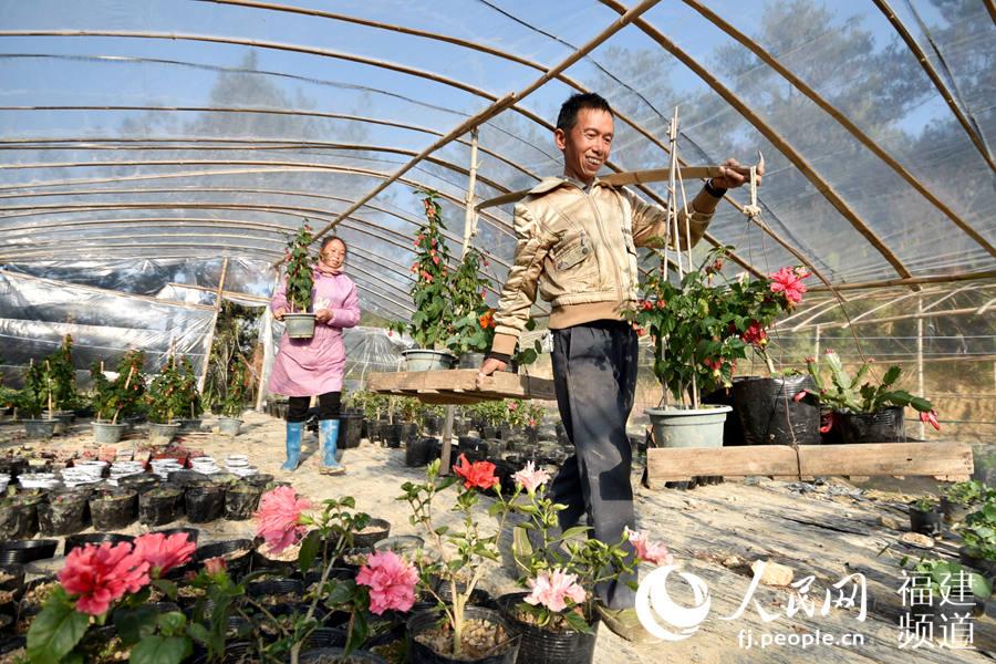 德化县龙浔镇丁��村一组脱贫户林生平,在自家的花圃里精选了几盆花,准备挑到城里去销售。 许华森摄